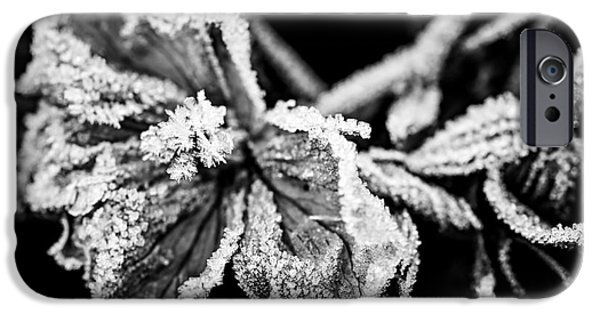 Frost Photographs iPhone Cases - Frosty flower iPhone Case by Elena Elisseeva