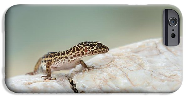 Wild Animals Pyrography iPhone Cases - Gecko lizard on rocks  iPhone Case by Oliver Sved