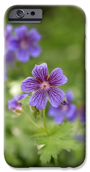 Geranium Himalayense iPhone Case by Frank Tschakert