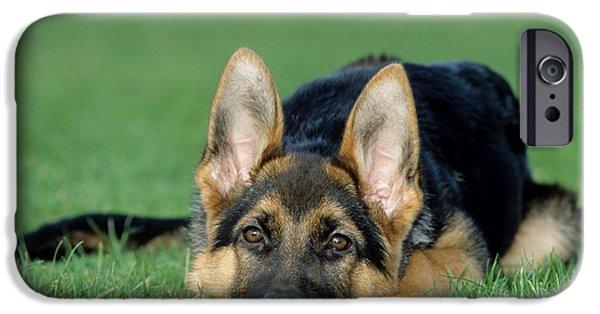 Lazy Dog iPhone Cases - German Shepherd Dog iPhone Case by Johan De Meester