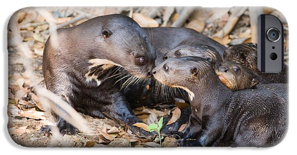 Love The Animal iPhone Cases - Giant Otter Pteronura Brasiliensis iPhone Case by Panoramic Images