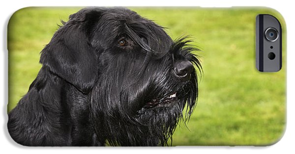 Dog Close-up iPhone Cases - Giant Schnauzer iPhone Case by Johan De Meester