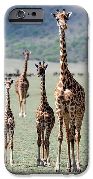 East Africa Photographs iPhone Cases - Giraffes Giraffa Camelopardalis iPhone Case by Panoramic Images
