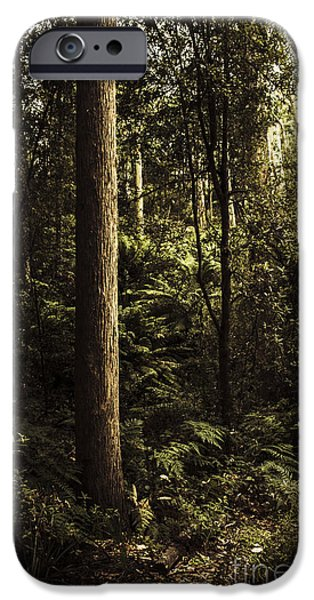 Park Scene iPhone Cases - Glengarry Tasmania bush forest in Australia iPhone Case by Ryan Jorgensen