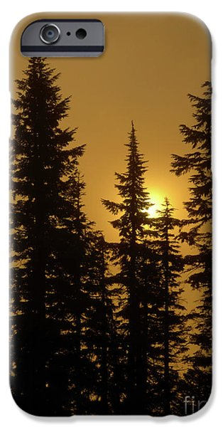 Fog Mist Photographs iPhone Cases - Golden Morning iPhone Case by Mike Dawson