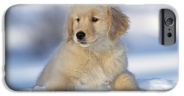 Fuzzy Golden Puppy iPhone Cases - Golden Retriever Puppy Dog iPhone Case by Rolf Kopfle