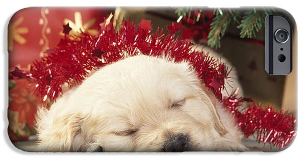 Lazy Dog iPhone Cases - Golden Retriever Under Christmas Tree iPhone Case by John Daniels