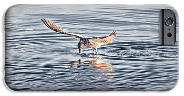 Sea Birds iPhone Cases - Gone Fishing iPhone Case by Patrick M Lynch