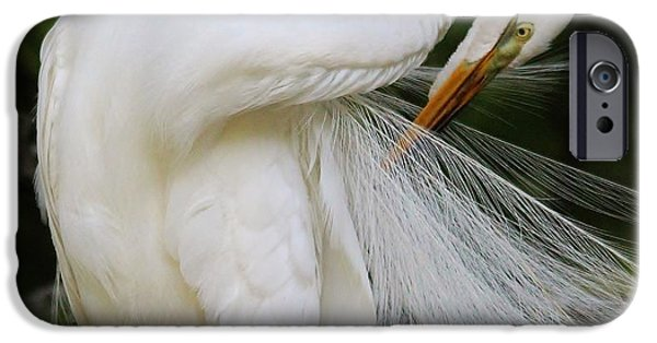 Baby Bird iPhone Cases - Gorgeous Great White Egret iPhone Case by Paulette Thomas
