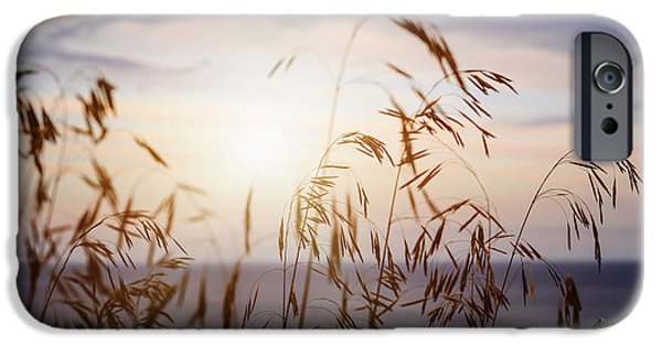 Sunflare iPhone Cases - Grass at sunset iPhone Case by Elena Elisseeva