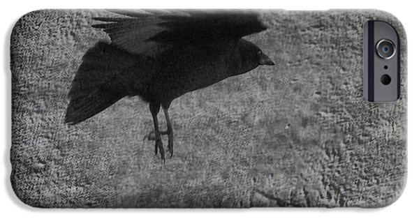 Crows iPhone Cases - Gray iPhone Case by Gothicolors Donna Snyder