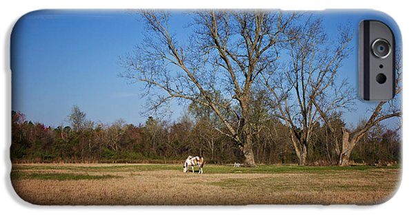 Nature Scene iPhone Cases - Grazing iPhone Case by Kim Hojnacki