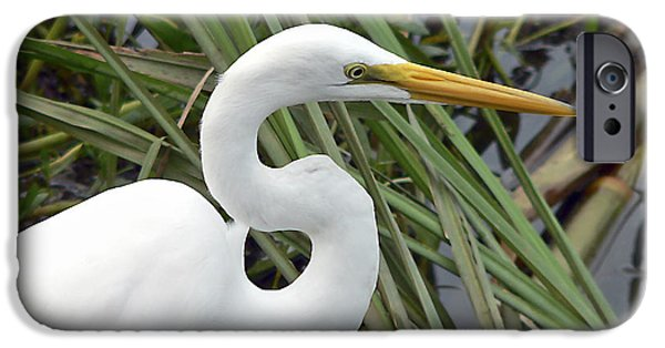 Recently Sold -  - Animals Photographs iPhone Cases - Great Egret Close Up iPhone Case by Al Powell Photography USA