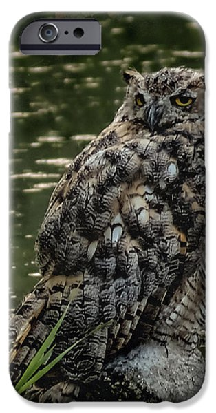 Great Horned Owl iPhone Case by Ernie Echols