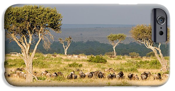 Masai Mara Photographs iPhone Cases - Great Migration Of Wildebeests, Masai iPhone Case by Panoramic Images