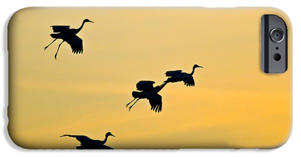 Flight iPhone Cases - Greater Sandhill Cranes In Flight iPhone Case by William H. Mullins