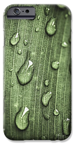Plants Photographs iPhone Cases - Green leaf abstract with raindrops iPhone Case by Elena Elisseeva