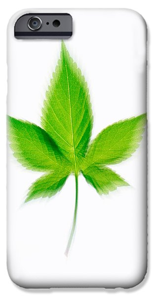 Cut-outs iPhone Cases - Green Leaf On Beige Background iPhone Case by Panoramic Images