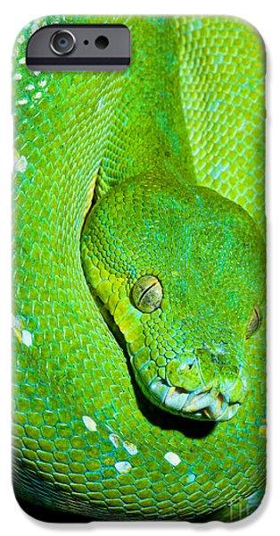Burmese Python iPhone Cases - Green Tree Python iPhone Case by Millard H. Sharp
