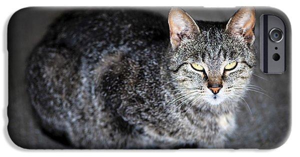 Sleepy iPhone Cases - Grey cat portrait iPhone Case by Elena Elisseeva