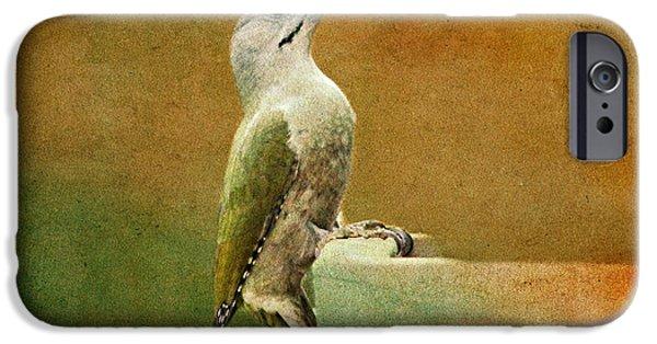 Woodpecker iPhone Cases - Grey-headed Woodpecker iPhone Case by Heike Hultsch