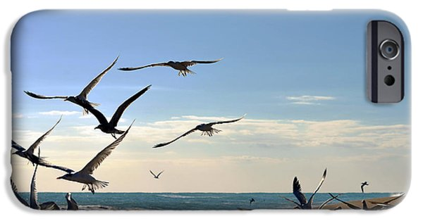 Flying Seagull iPhone Cases - Gull Flight iPhone Case by Laura  Fasulo