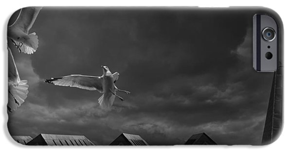 Flying Seagull iPhone Cases - Gulls over Quebec City iPhone Case by Mountain Dreams
