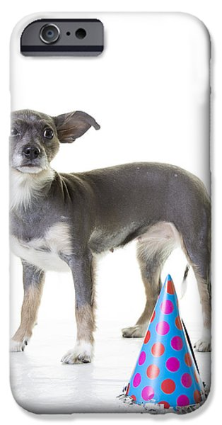 Cute Puppy Photographs iPhone Cases - Happy Birthday iPhone Case by Edward Fielding