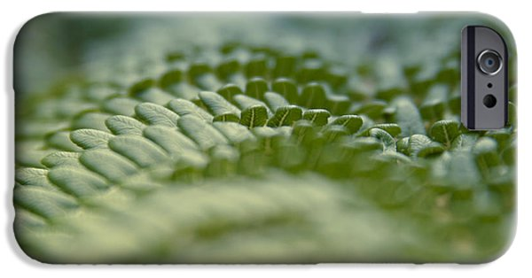 Cibotium iPhone Cases - Hapuu ii - Hawaiian Tree Fern - Cibotium menziesii iPhone Case by Sharon Mau