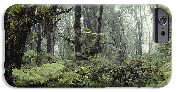 Cibotium iPhone Cases - Hawaiian Rainforest iPhone Case by Gregory G. Dimijian, M.D.