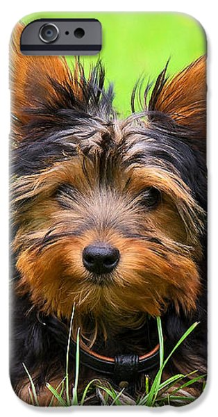 Hello Toby iPhone Case by Angela Doelling AD DESIGN Photo and PhotoArt