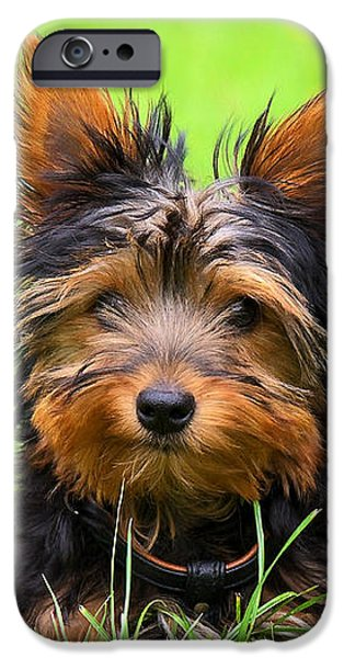 Dog iPhone Cases - Hello Toby iPhone Case by Angela Doelling AD DESIGN Photo and PhotoArt