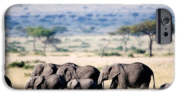 Masai Mara Photographs iPhone Cases - Herd Of African Elephants Loxodonta iPhone Case by Panoramic Images