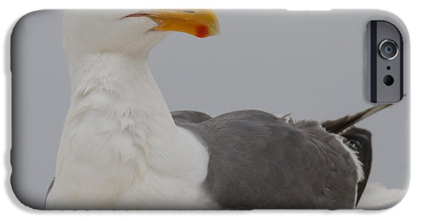 Herring Gull iPhone Cases - Herring Gull iPhone Case by Angie Vogel