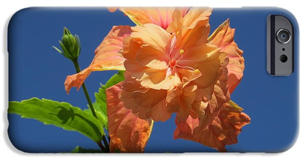 Hibiscus iPhone Cases - Hibiscus  iPhone Case by Zina Stromberg