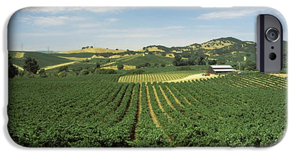 Vineyard In Napa iPhone Cases - High Angle View Of A Vineyard, Carneros iPhone Case by Panoramic Images