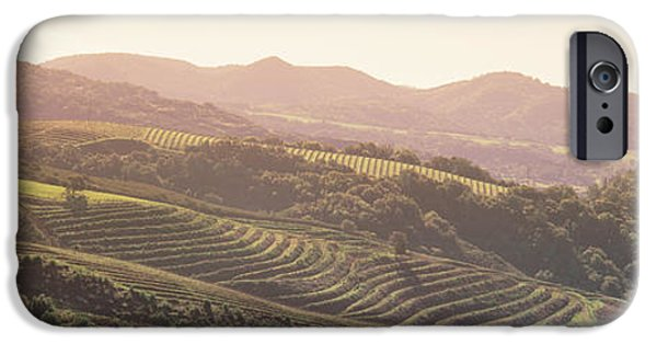 Sonoma iPhone Cases - High Angle View Of A Vineyard iPhone Case by Panoramic Images
