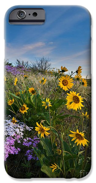 Phlox iPhone Cases - High Desert Spring iPhone Case by Mike  Dawson