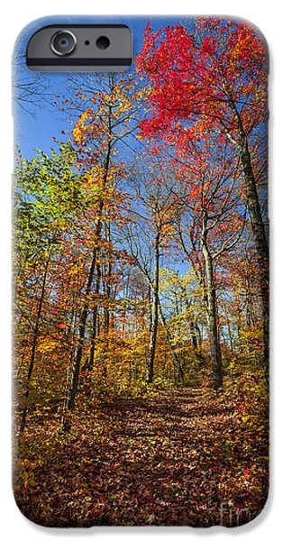Fallen Leaf iPhone Cases - Hiking trail in fall forest iPhone Case by Elena Elisseeva
