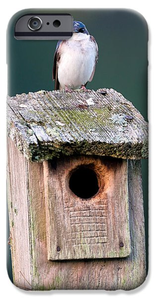 Swallow iPhone Cases - Home Sweet Home iPhone Case by Bill  Wakeley