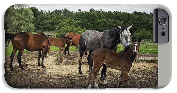 Bonding iPhone Cases - Horses iPhone Case by FL collection