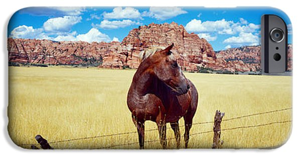 Meadow Photographs iPhone Cases - Horses Grazing In A Meadow, Kolob iPhone Case by Panoramic Images
