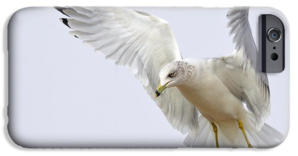 Seagull iPhone Cases - Hover iPhone Case by Fraida Gutovich