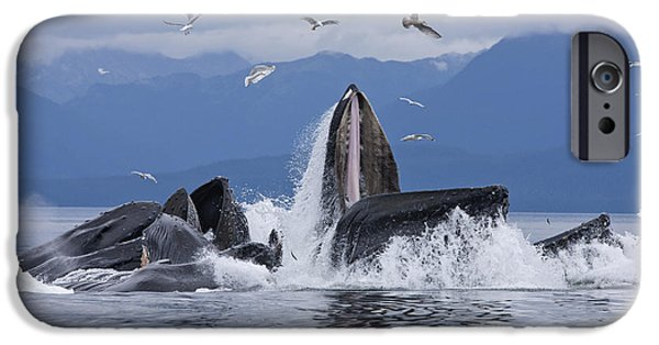 Chatham iPhone Cases - Humpback Whales Bubble Net Feeding iPhone Case by John Hyde
