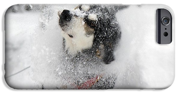 Lapin Laani iPhone Cases - Husky dogs pull a sledge  iPhone Case by Lilach Weiss