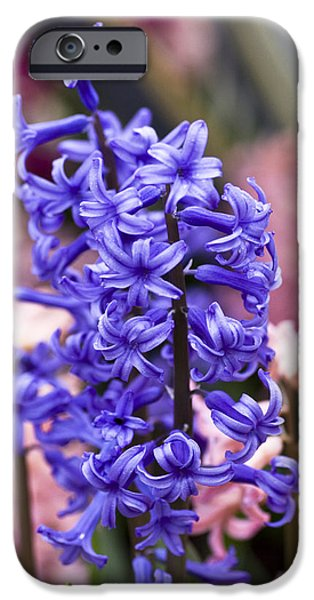 Garden Images iPhone Cases - Hyacinth Garden iPhone Case by Frank Tschakert