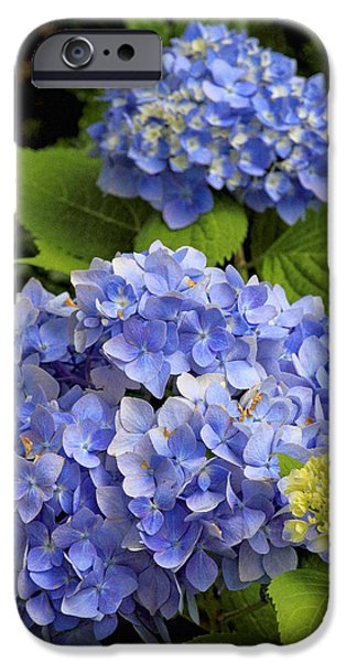 Tea Party iPhone Cases - Hydrangeas iPhone Case by Geraldine Scull