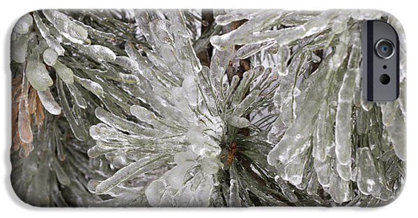 Nature Abstracts iPhone Cases - Ice on pine branches iPhone Case by Blink Images
