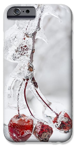 Winter Storm iPhone Cases - Icy branch with crab apples iPhone Case by Elena Elisseeva