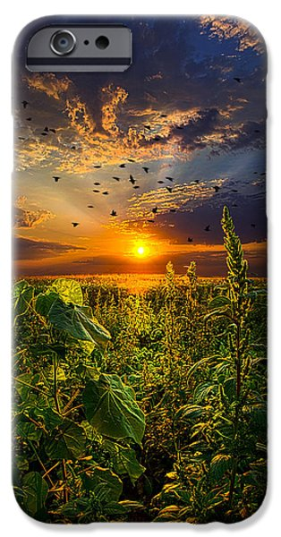 Pines Photographs iPhone Cases - In Flight iPhone Case by Phil Koch
